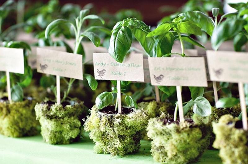 Mărturii Verzi și Pline De Viață By Plantecadouro Nuntă în Grădină