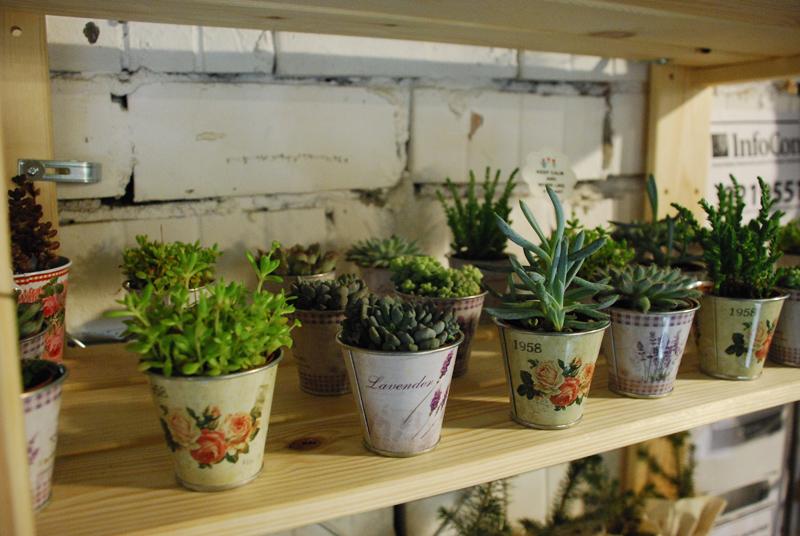 plant designrulz (2)