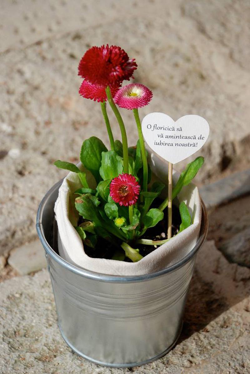 plante cadou (3)