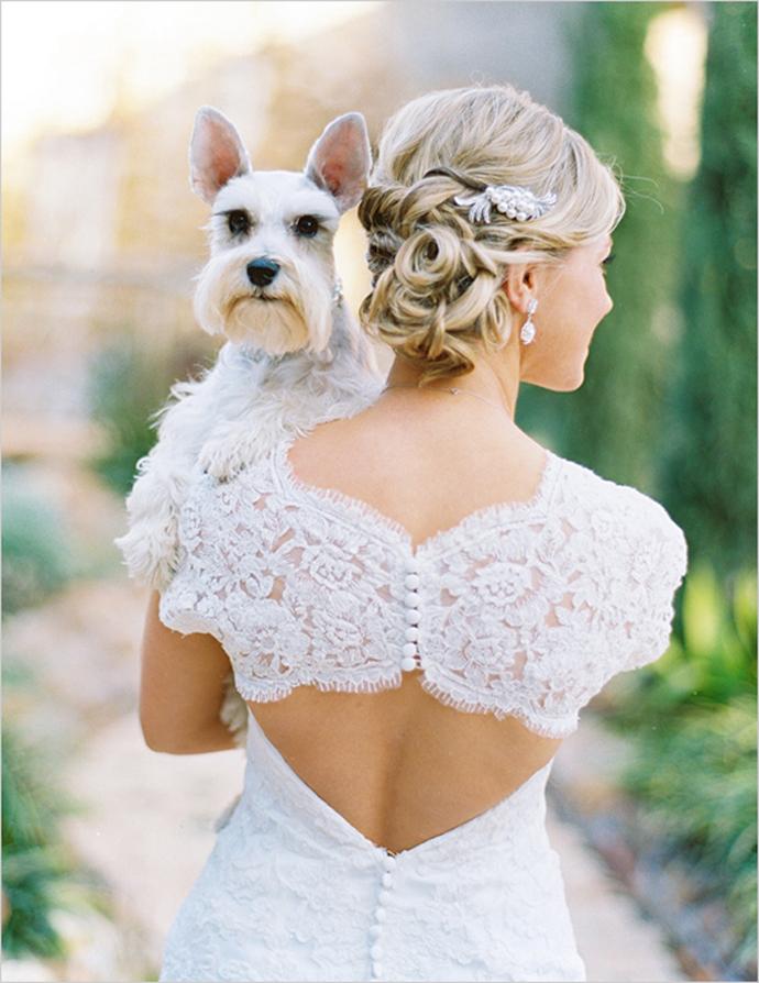 caine nunta in gradina (13)