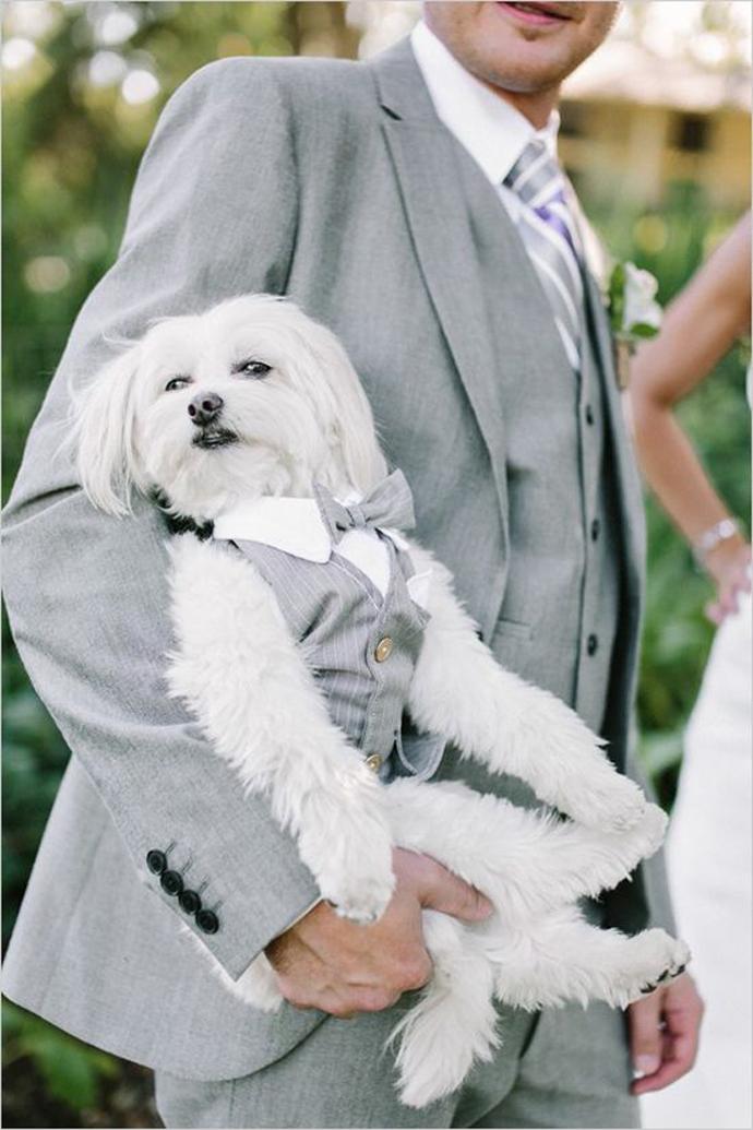 caine nunta in gradina (15)