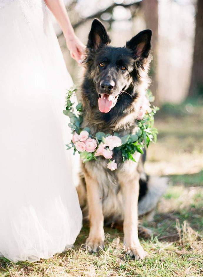 caine nunta in gradina (18)