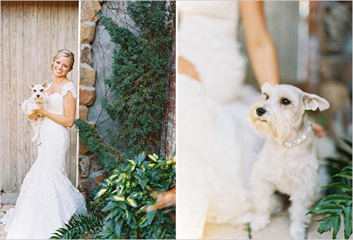 caine nunta in gradina (2)