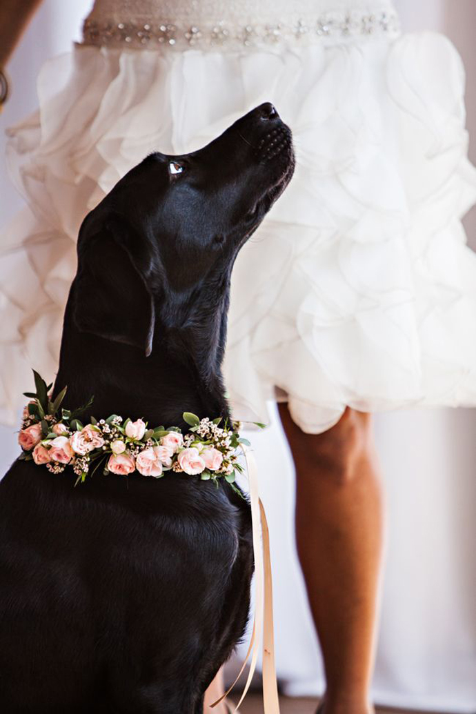 caine nunta in gradina (22)