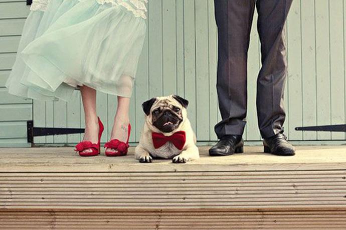 caine nunta in gradina (5)