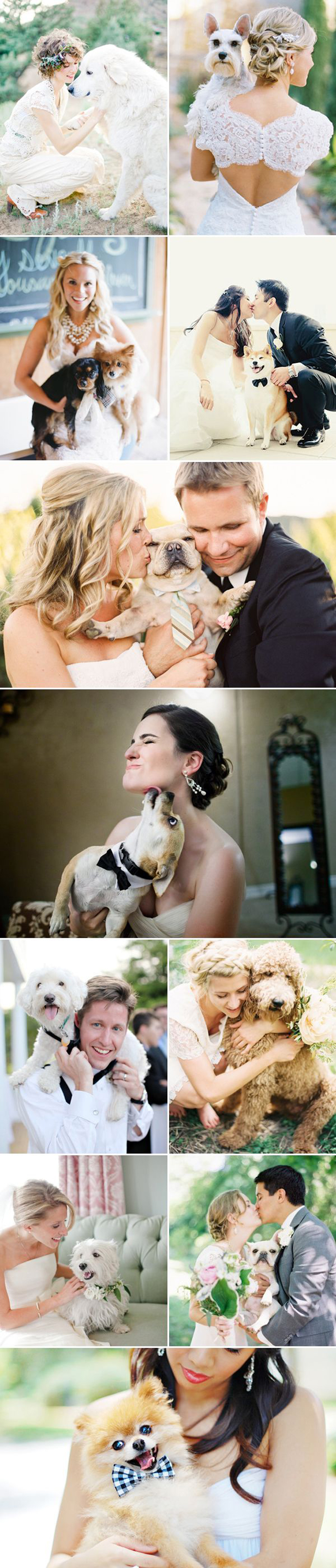 caine nunta in gradina (8)