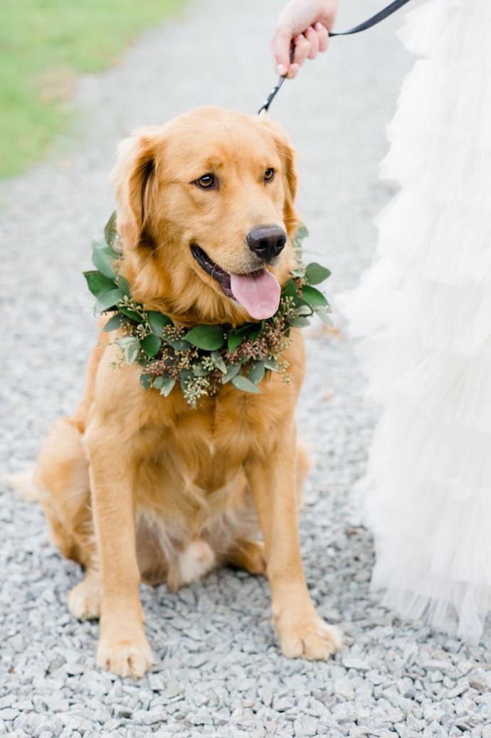 caine nunta in gradina (9)