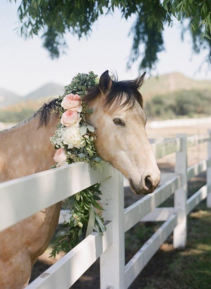 cai-nunta in gradina (21)