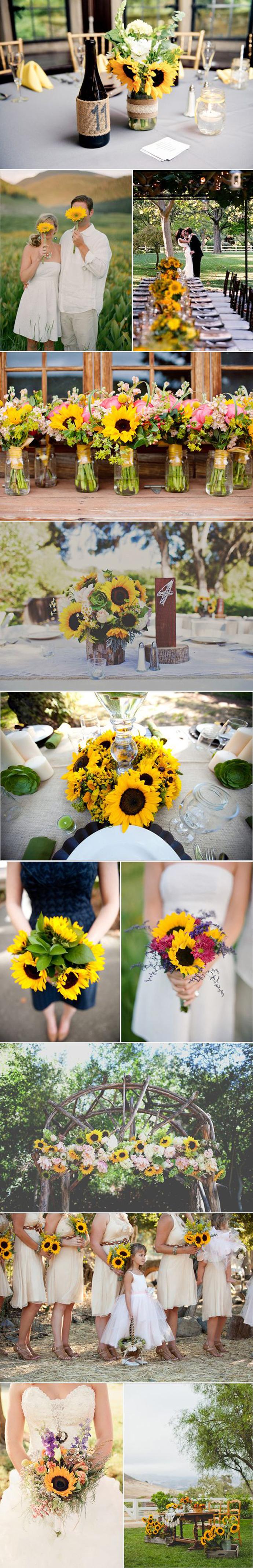 floarea soarelui-nunta in gradina (1)