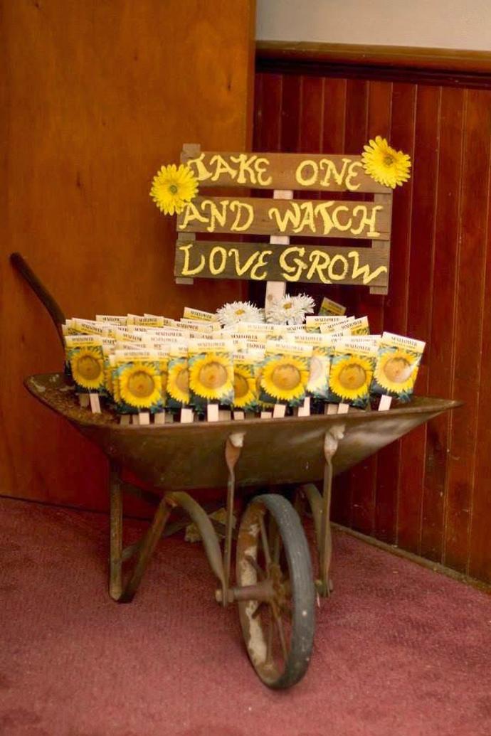floarea soarelui-nunta in gradina (25)