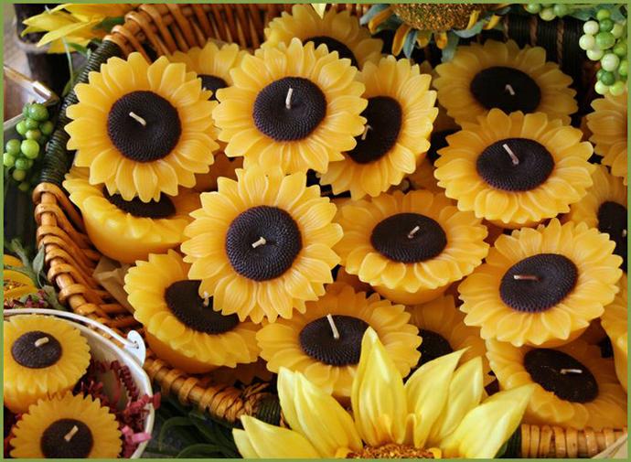 floarea soarelui-nunta in gradina (28)