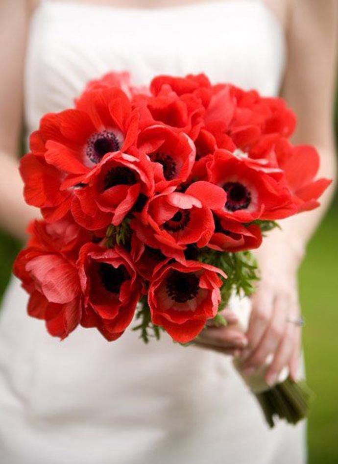 maci-nunta in gradina (5)