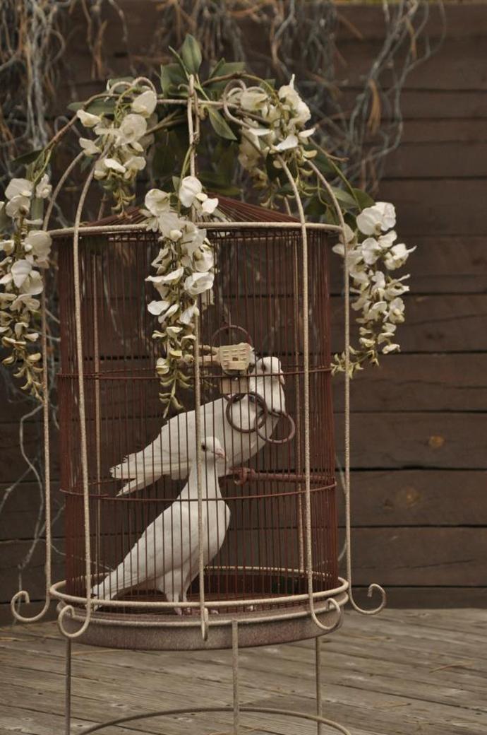 porumbei-nunta in gradina (20)