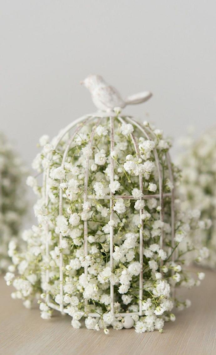 porumbei-nunta in gradina (4)