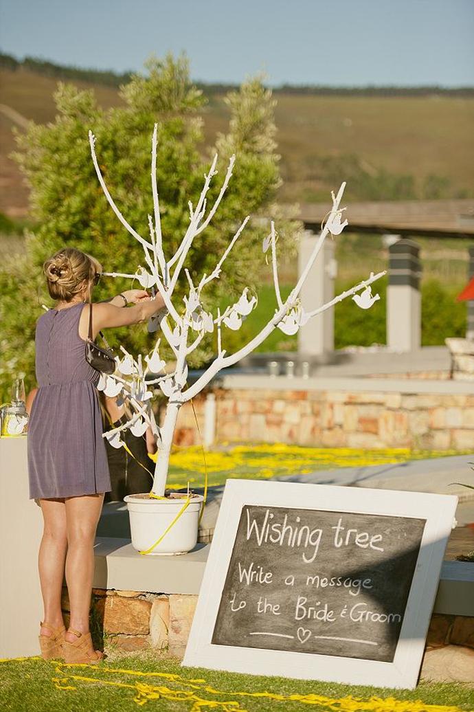 porumbei-nunta in gradina (6)