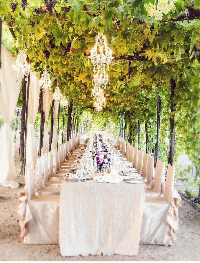 vin-nunta in gradina (4)
