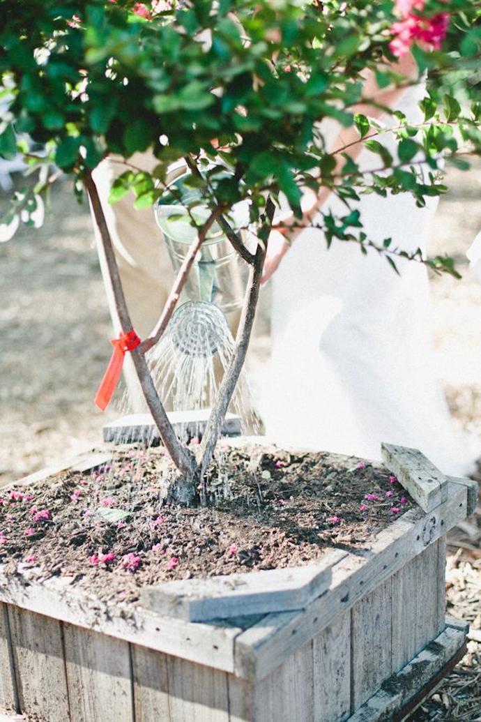 copac-nunta in gradina (11)