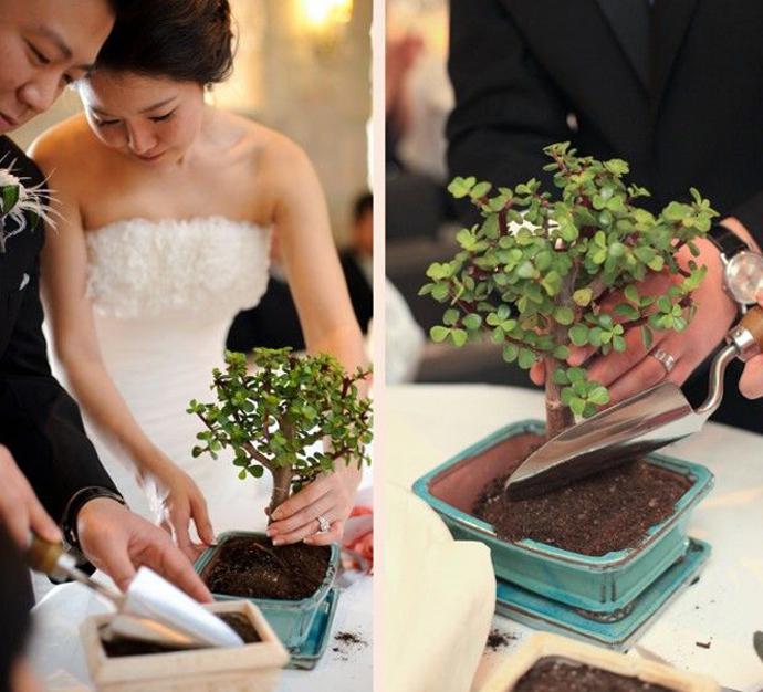 copac-nunta in gradina (16)