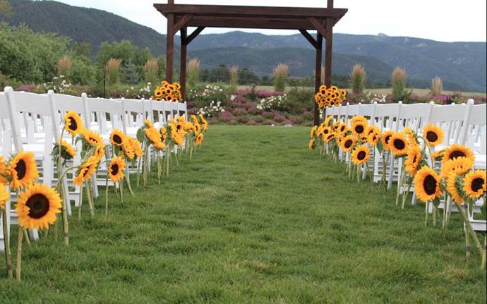 floarea soarelui-nunta in gradina (29)