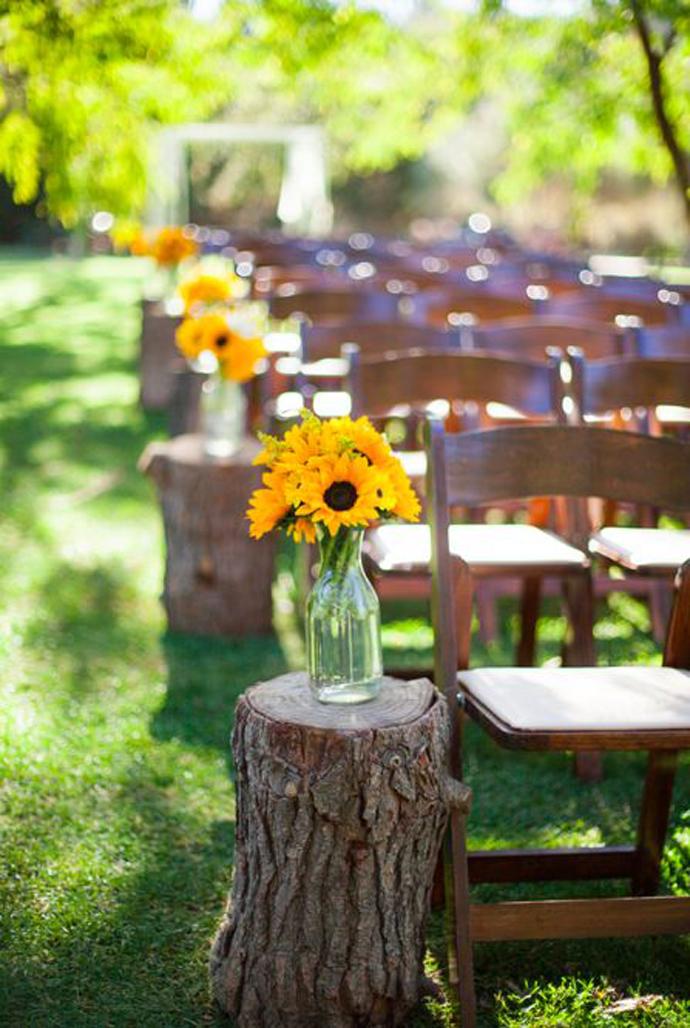 floarea soarelui-nunta in gradina (3)