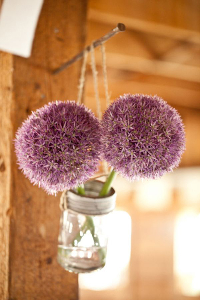 Purple alliums-nunta in gradina (16)