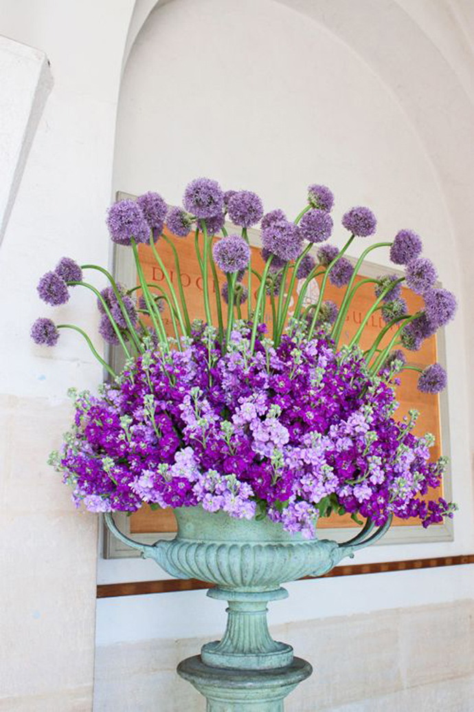 Purple alliums-nunta in gradina (5)