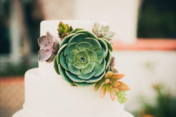 tort plante suculente-nunta in gradina (8)